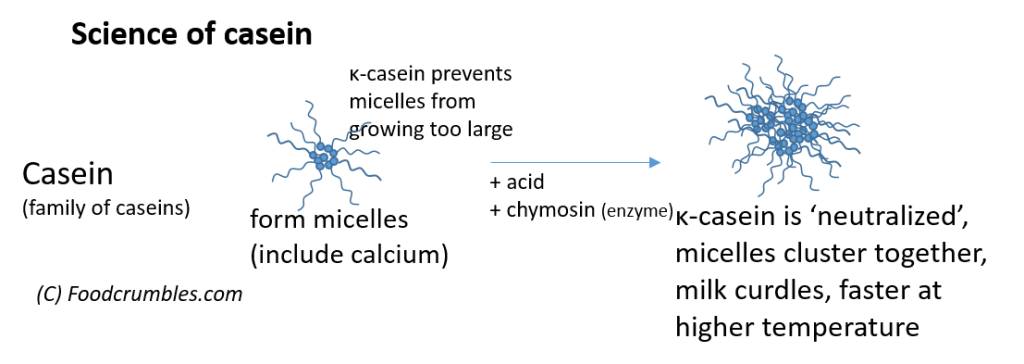 Casein proteins chemical reactions