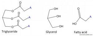 Triglyceride with glycerol and fatty acid