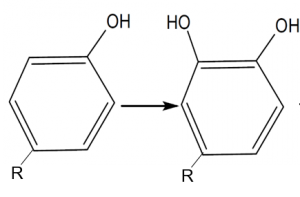ppo enzymatic browning step 1 hydroxylation