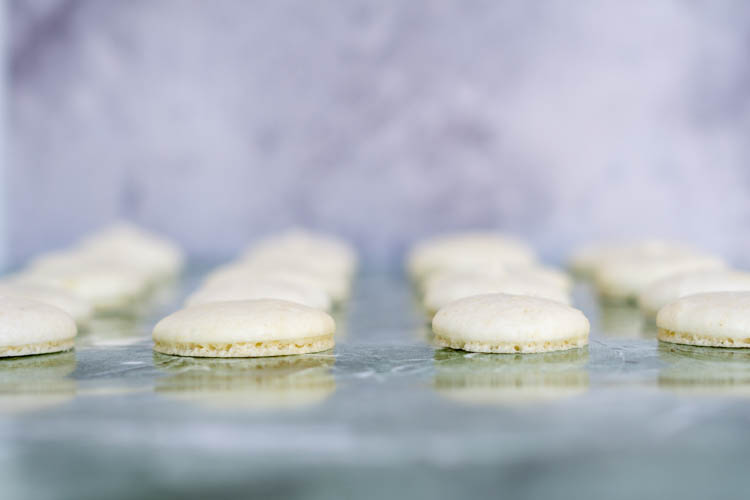 front view of single macaron shells